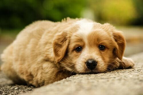 Como tratar os cães maltratados?
