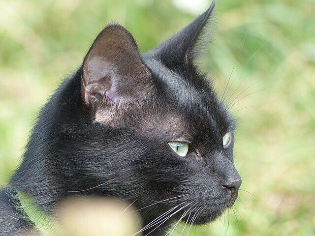 Um catálogo de cores de gatos