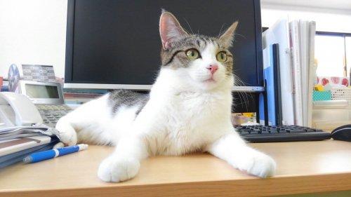 Uma empresa adotou vários gatos para combater o estresse