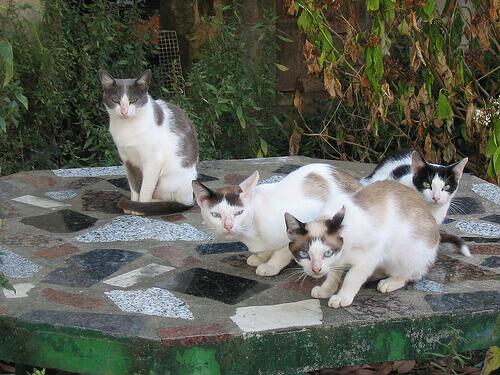 Guia para entender os gatos