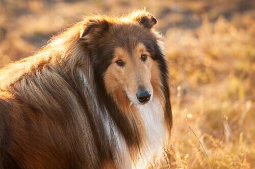 Diabetes em cães: como evitar essa doença
