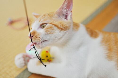 Exercícios para fazer com gatos