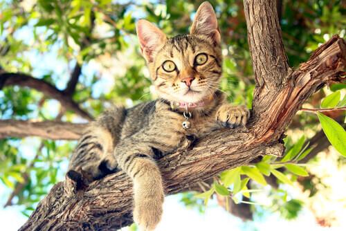 Gato sobre um galho de árvore