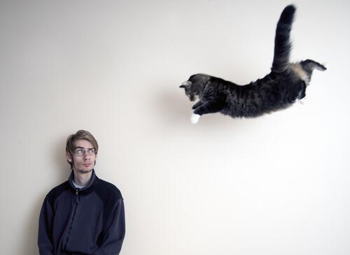 Gato pulando sobre o dono