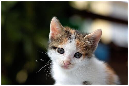 Filhote de gato
