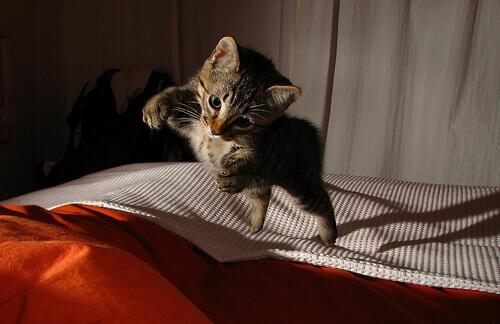 Sabia que os gatos sobrevivem a quedas elevadas mas não intermediárias?