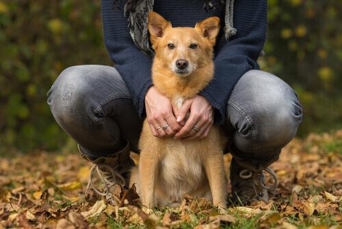 A insuficiência cardíaca em cães
