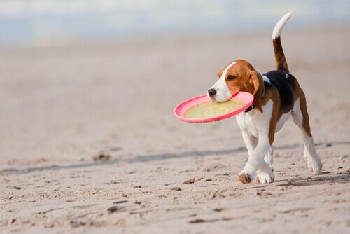 Como brincar com seu animal de estimação no verão