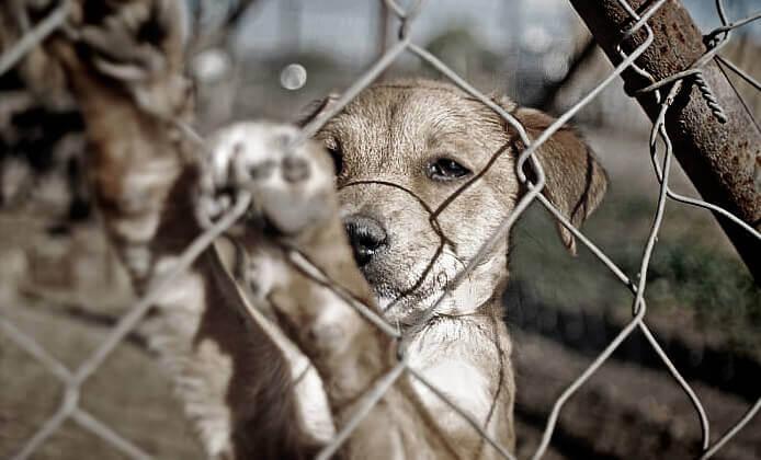 Filhote de cão preso pela cerca