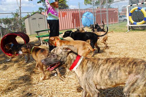 Cães sendo treinados