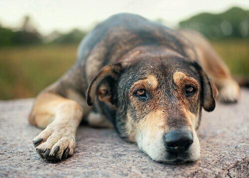 Dizemos NÃO aos maus-tratos contra animais