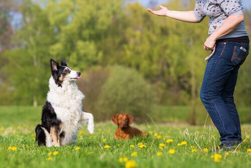 Exercícios de obediência básica para cães