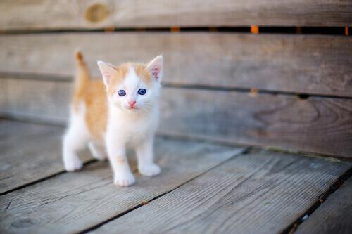 Os cuidados com um gato órfão recém-nascido