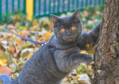 Passeando com gato na coleira