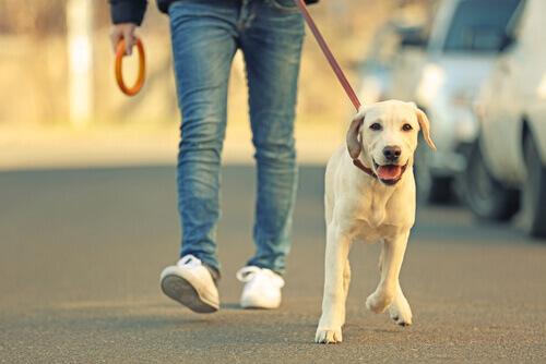 dono passeando com cão na coleira