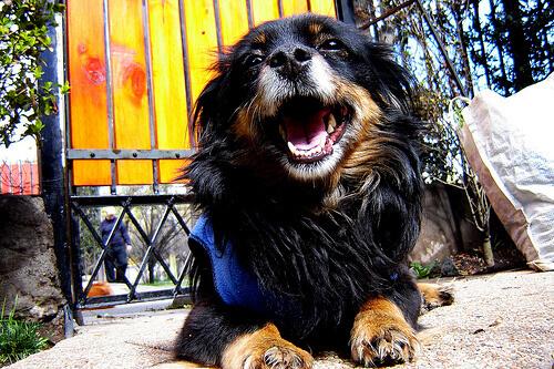 A piometra em cadelas