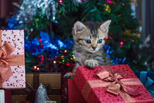 gato com presentes de Natal