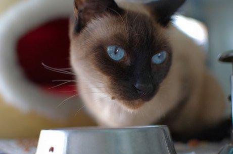 Receitas caseiras para gatos