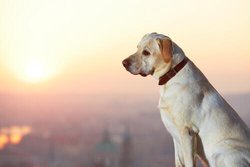 Oferecer recompensa por um cão perdido dá resultado?
