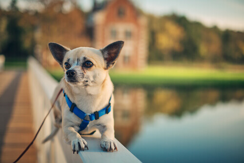 No retorno de um hotel para cães, mudanças em seu pet