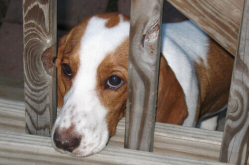 Seis sinais de medo nos cães: dicas para empatizar com eles