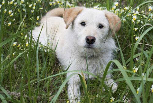 O que é a terceira pálpebra dos cães?