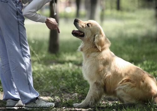 dona treinando cão