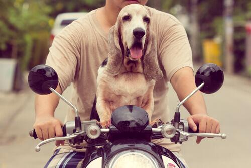 Como viajar de moto com seu cão
