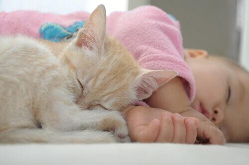 Bebê dormindo com gatinho