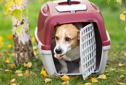 Cachorro na caixa de transporte