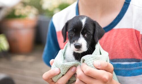Filhote de cão envolto em uma toalha