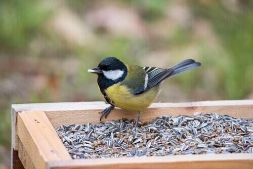 Os alimentos venenosos para aves