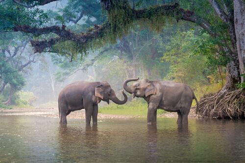 11 animais em perigo de extinção