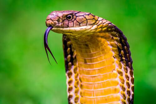 10 animais mais venenosos do mundo