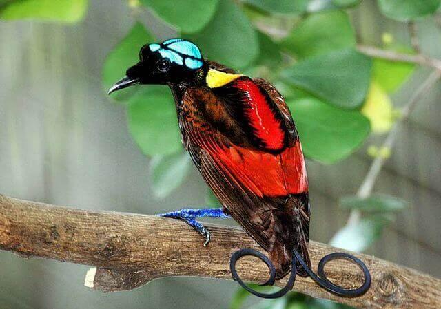 Aves impressionantes: conheça algumas