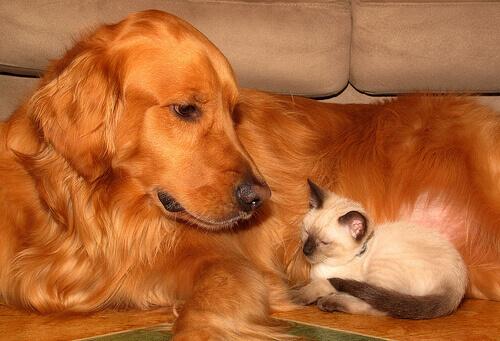 Cuidados para o bem-estar animal