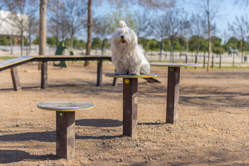Cachorro em parque para cães