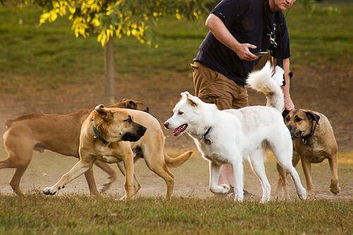 4 brincadeiras alternativas sem bolas para cães