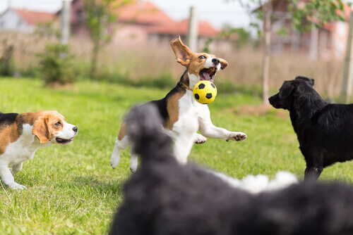Cachorros brincando com bola