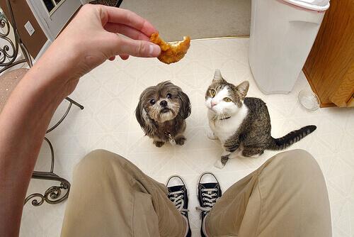 O que cães e gatos comem é diferente?