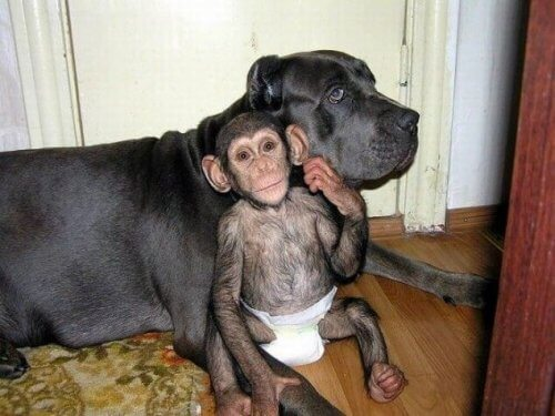 Qual é o animal com maior inteligência lógica?
