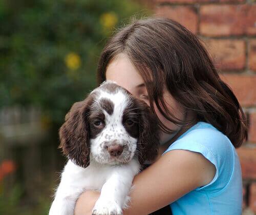 A ciência mostra que cães têm sentimentos