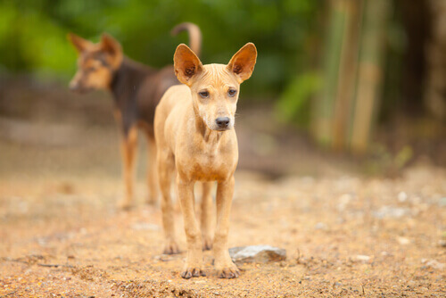 Cachorros vira-latas de rua