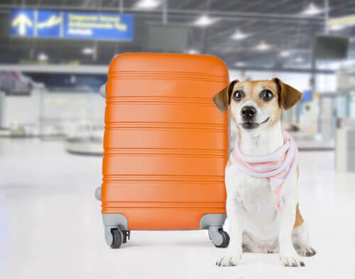 Cachorro com mala laranja no aeroporto