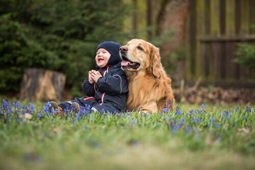 Raças de cães ideais para crianças