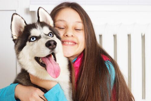 Conheça os cães ideais para cães