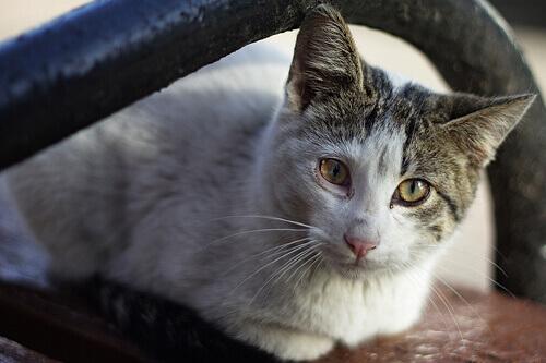 Gato com leucemia
