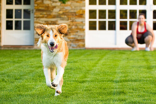 Como adestrar o seu cão para que ele não fuja de casa