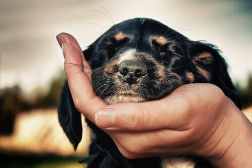 Dona segurando o rosto de um cachorrinho na mão