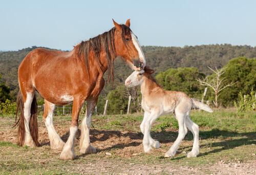 Cavalo com seu filhote